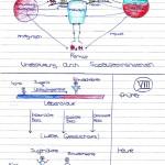 Mind-Map zu den Maximen_4kl